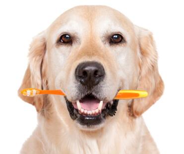 pet-dental1